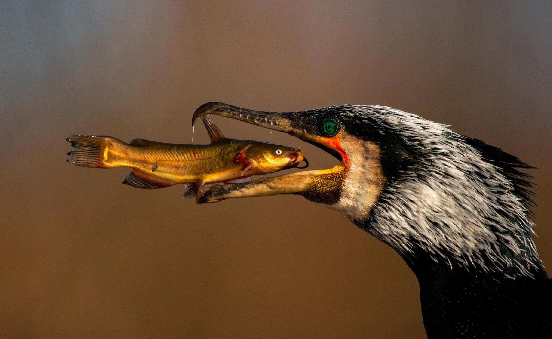 Aves Photos Exhibitions - Nature Photography Festival in Namur